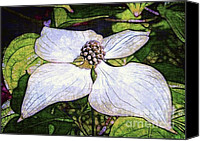 Judi Bagwell Canvas Prints - Dogwood Days Canvas Print by Judi Bagwell