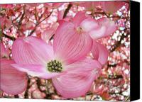 Nature Artwork Canvas Prints - Dogwood Tree 1 Pink Dogwood Flowers Artwork Art Prints Canvas Framed Cards Canvas Print by Baslee Troutman Fine Art Collections