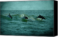 Panama City Beach Photo Canvas Prints - Dolphins Canvas Print by Sandy Keeton
