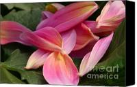 Steve Augustin Canvas Prints - Done Blooming Canvas Print by Steve Augustin