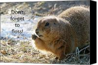 Prairie Dog Photo Canvas Prints - Dont Forget to Floss Canvas Print by Karol  Livote