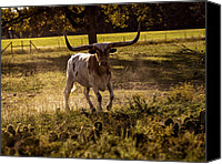 Barbecue Canvas Prints - Dont Mess With Texas ..... Long Horns that is  Canvas Print by Kelly Rader