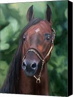 Horse Painting Canvas Prints - Dont Worry Saddlebred Sire Canvas Print by Donna Thomas