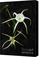 Spider Lily Canvas Prints - Double Spider Lily Painting Canvas Print by M K  Miller