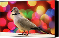 Dove Canvas Prints - Dove Against Bokeh Light Canvas Print by Mis Imagenes