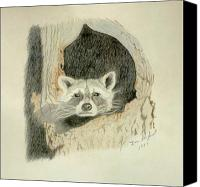Raccoon Drawings Canvas Prints - Down for the night Raccoon Canvas Print by Daniel Shuford