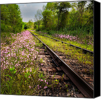 Wild-flower Canvas Prints - Down the tracks Canvas Print by Bill  Wakeley