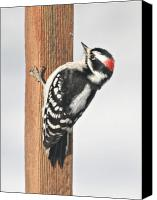 Downy Canvas Prints - Downy Woodpecker on the Deck Post Canvas Print by Laurie With