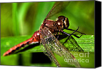 Insect Photography Canvas Prints - Dragon Fly Canvas Print by Terry Elniski