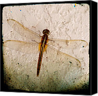 Dragonfly Canvas Prints - Dragonfly - #dragonfly #insect #bug Canvas Print by Troy Thomas