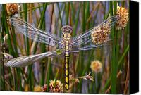 Dragonfly Canvas Prints - Dragonfly Canvas Print by Alison Lee  Cousland
