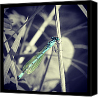 Dragonfly Canvas Prints - Dragonfly. #dragonfly #blackandwhite Canvas Print by Phil De Montjoie Heard