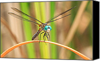Swamp Canvas Prints - Dragonfly Canvas Print by Everet Regal