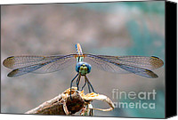 Saudi Canvas Prints - Dragonfly Headshot Canvas Print by Graham Taylor