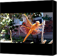 Dragonfly Canvas Prints - #dragonfly In Front Of The House Canvas Print by Tiffany Morales