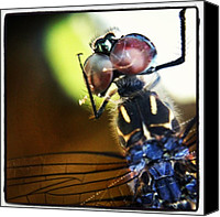 Dragonfly Canvas Prints - Dragonfly In Web Canvas Print by Dave Edens