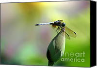 Lotus Art Canvas Prints - Dragonfly in Wonderland Canvas Print by Sabrina L Ryan