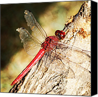 Dragonfly Canvas Prints - Dragonfly #instamood #animals #wings Canvas Print by Luis Florentino