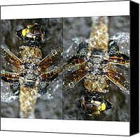 Dragonfly Canvas Prints - Dragonfly #iphonesia #instagood Canvas Print by Robin Hedberg