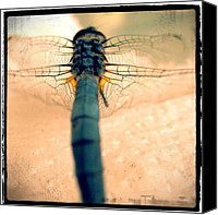 Dragonfly Canvas Prints - Dragonfly Canvas Print by Jennifer Augustine