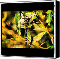 Dragonfly Canvas Prints - Dragonfly Magic #webstagram #macro Canvas Print by Chris Barber