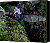 Insect Symbolism Canvas Prints - Dragonfly Canvas Print by Mary Rath
