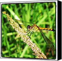 Dragonfly Canvas Prints - #dragonfly #merritt #island #florida Canvas Print by Michael Hughes