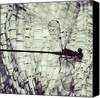 Dragonfly Canvas Prints - Dragonfly Canvas Print by Michelle Peak