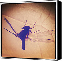 Dragonfly Canvas Prints - #dragonfly #tent #shadow #beautifulday Canvas Print by Maygen Heap