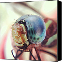 Dragonfly Canvas Prints - Dragonfly The Boys Found Canvas Print by Aimee Junnila 