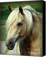 White Horses Canvas Prints - Dreams of Honey Canvas Print by Karen Wiles