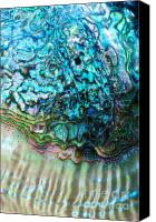 Abalone Seashell Canvas Prints - Dreams of the Sea Nourish Thee Canvas Print by Joy Gerow