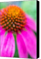 Dreamy Flower Canvas Prints - Dreamy Abstract Coneflower  Canvas Print by Susan Stone