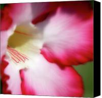 Floral Canvas Prints - Dreamy Desert Rose Canvas Print by Jeannie Burleson
