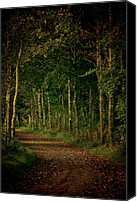"\""painterly Photography\\\"" Photo Canvas Prints - Dress Me In Autumn Canvas Print by Odd Jeppesen"