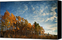 Woody Canvas Prints - Dressed In Autumn Colors Canvas Print by Priska Wettstein