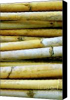 Cane Canvas Prints - Dried Canes Canvas Print by Carlos Caetano