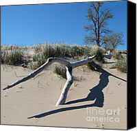 Indiana Dunes Canvas Prints - Driftwood 1 Canvas Print by Cedric Hampton