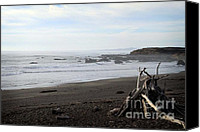 Wood Mixed Media Canvas Prints - Driftwood and Moonstone Beach Canvas Print by Linda Woods