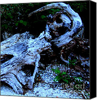 Patrick Mills Canvas Prints - Driftwood Away Canvas Print by Patrick Mills