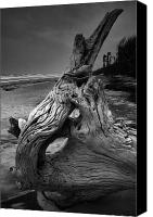 Beach Photograph Canvas Prints - Driftwood on Beach Canvas Print by Steven Ainsworth
