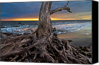 Tropical Sunset Canvas Prints - Driftwood on Jekyll Island Canvas Print by Debra and Dave Vanderlaan