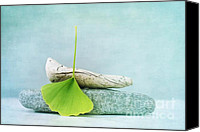 Driftwood Canvas Prints - Driftwood Stones And A Gingko Leaf Canvas Print by Priska Wettstein