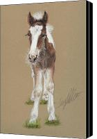 Equestrian Pastels Canvas Prints - Drum Colt Noah Canvas Print by Terry Kirkland Cook