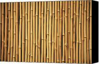 Brandon Tabiolo Canvas Prints - Dry Bamboo Rows Canvas Print by Brandon Tabiolo - Printscapes