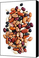 Dry Canvas Prints - Dry beans Canvas Print by Elena Elisseeva