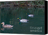 Digital Prints Pyrography Canvas Prints - Ducks in a Line  Canvas Print by The Kepharts