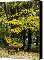 Park Benches Canvas Prints - Dun Na Ri Forest Park, County Cavan Canvas Print by Peter McCabe