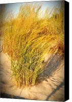 Sand Fences Canvas Prints - Dune Grass II  - Jersey Shore Canvas Print by Angie McKenzie