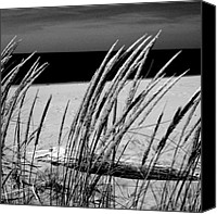 Driftwood Canvas Prints - Dune Grass in Early Spring Canvas Print by Michelle Calkins